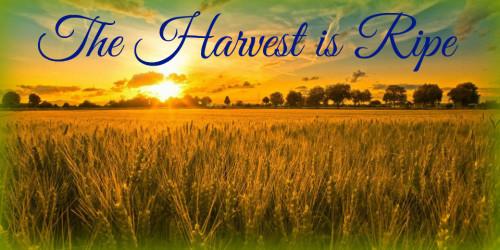 End time harvest